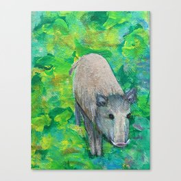 Wild Boar Canvas Print