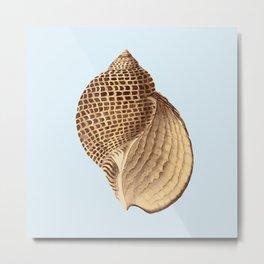 Sea Shell Three Metal Print