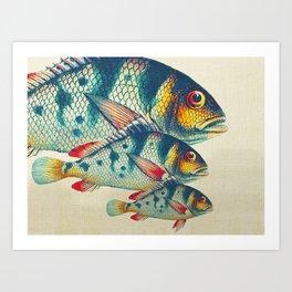 Fish Classic Designs 3 Art Print