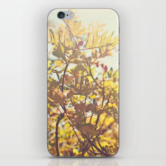 Fading Fall Leaves iPhone & iPod Skin