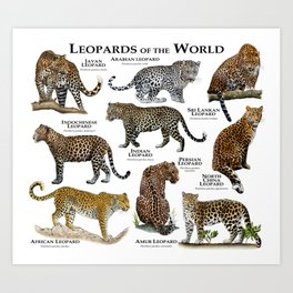 Leopards of the world Art Print