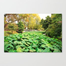 Taro field Canvas Print