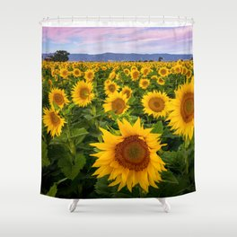 Field of Sunflowers, California Shower Curtain