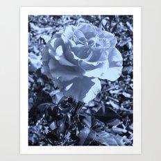 roses VIII Art Print