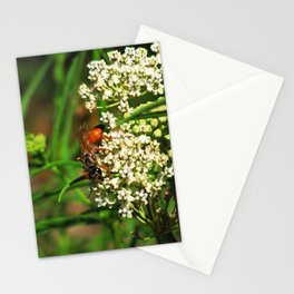 Wasp 1795 Stationery Cards