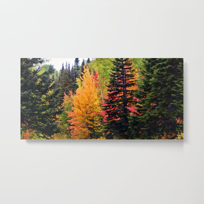 Deep in the Forest (Fall Colors) Metal Print