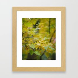 leaves fall Framed Art Print