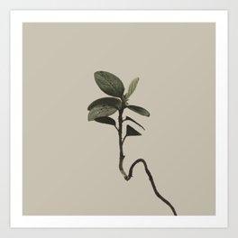 Plant Variations 7 Art Print