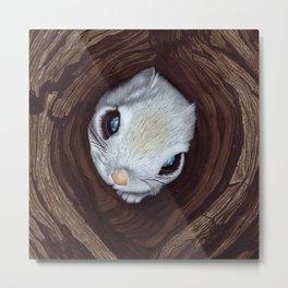 Siberian flying squirrel Metal Print