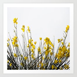 Minimal Garden -Yellow Version - Black Stems with Yellow Petals On White #decor #society6 #buyart Art Print