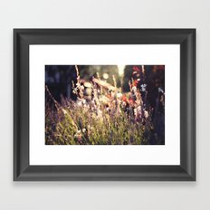 Flowers and light Framed Art Print