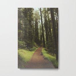 Trail / Muir Woods Metal Print
