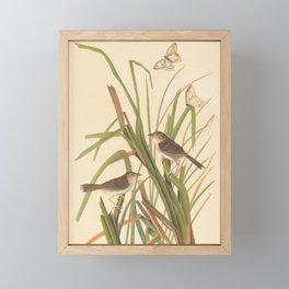 Naturalist Finches Framed Mini Art Print