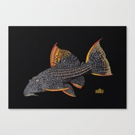 Scarlet Pleco Full Color Canvas Print