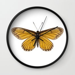 """Butterfly species Acraea issoria """"Yellow Coster"""" Wall Clock"""