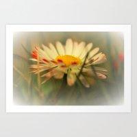 daisy Art Prints featuring Daisy by Falko Follert Art-FF77