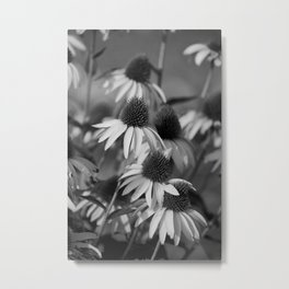 Cone Flower Echoes In Black & White Metal Print