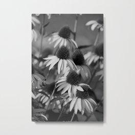 Cone Flower Echoes In Black & White Metal Print