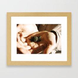 Lil' Turtle Framed Art Print