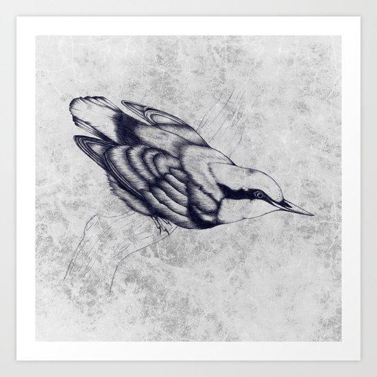 Nuthatch Art Print