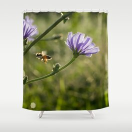 Bee flying on the Chicory flower. Shower Curtain