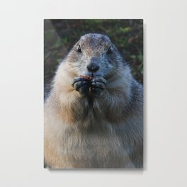 prairie dog II Metal Print