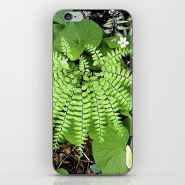 Maidenhair Fern, Adiantum Pedatum, And Friends iPhone Skin
