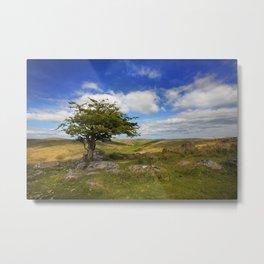 Dartmoor Tree Metal Print