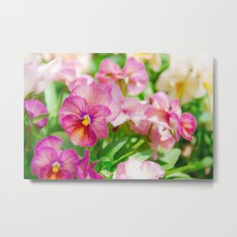 pansy in a garden Metal Print