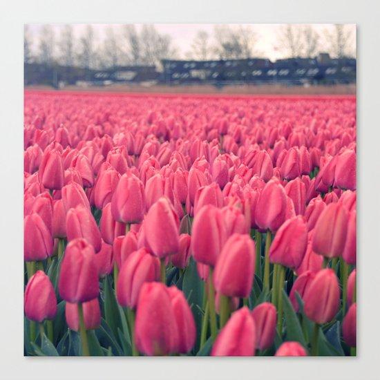 Tulips Field #5 Canvas Print