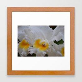 Orchid Bunch Framed Art Print
