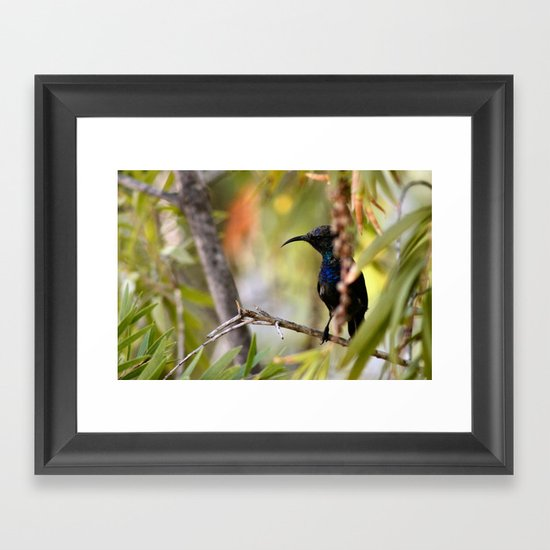 SUNBIRD Framed Art Print