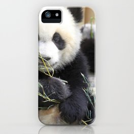 Super Dainty Small Young Animal Eating Eucalyptus Leafs Ultra High Resolution iPhone Case
