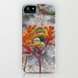 Orange Kangaroo Paw Flowers iPhone Case