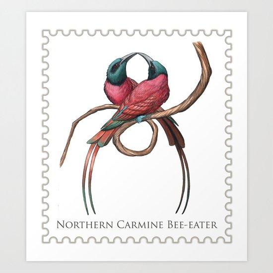 Northern Carmine Bee-eater (Merops nubicus) Art Print