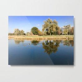 Ducks in Reflective Waters Metal Print