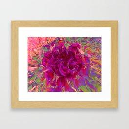 "Extreme Dahlia ""Janny P"" Framed Art Print"