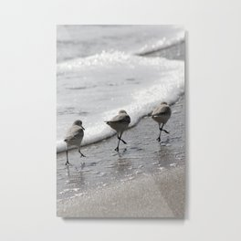 Sandpipers Birds on the Beach Metal Print