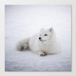 White snow arctic fox Canvas Print