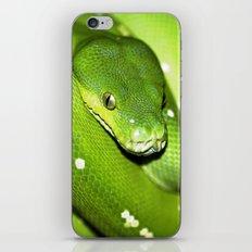 Green Python Portrait 3 iPhone & iPod Skin