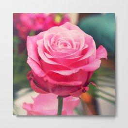 Elegant pink rose Metal Print