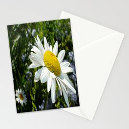 Close Up Common White Daisy With Garden Stationery Cards