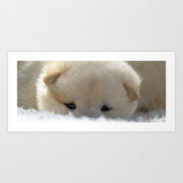 Shiba Inu Puppy Art Print