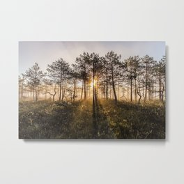 First rays of sunshine Metal Print