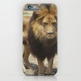 The Staring Lion iPhone Case