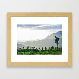 Tea Garden - 1 Framed Art Print