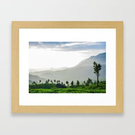 Tea Garden - 1 Framed Art Print