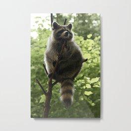 Kung Fu Raccoon Metal Print