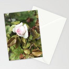 Pink Rose - Golden Gate Park Rose Garden Stationery Cards