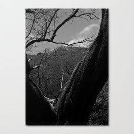 Split Tree Canvas Print